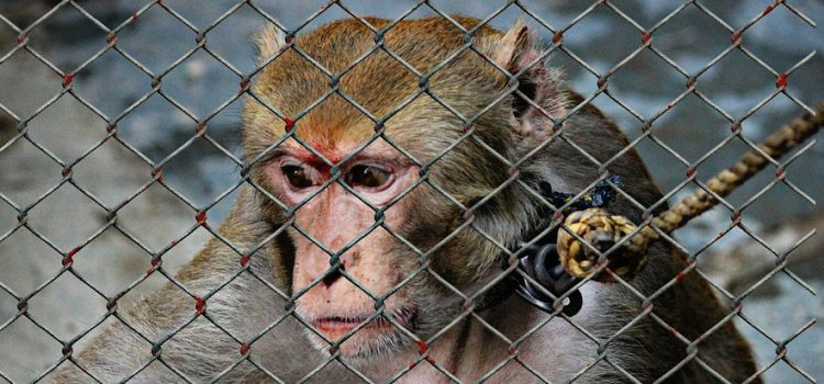 Animal Welfare Advocates Respond to USDA Removal of Animal Rights Records